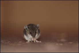 Quel mammifère presque aveugle a donné son nom à une couleur entre le gris foncé et le brun ?