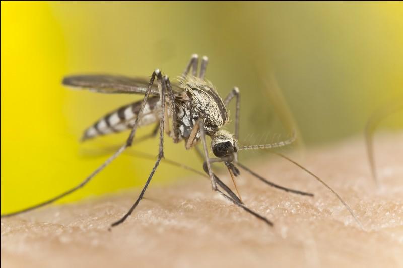 Par quoi sont attirés les moustiques ?