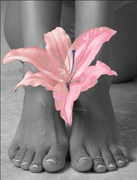 Si je suis un champignon, à quel animal appartient mon pied ?