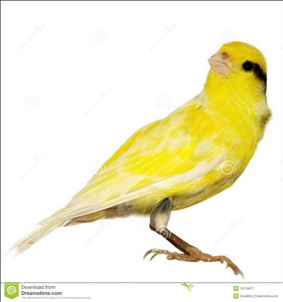 Cet oiseau s'appelle un canari.