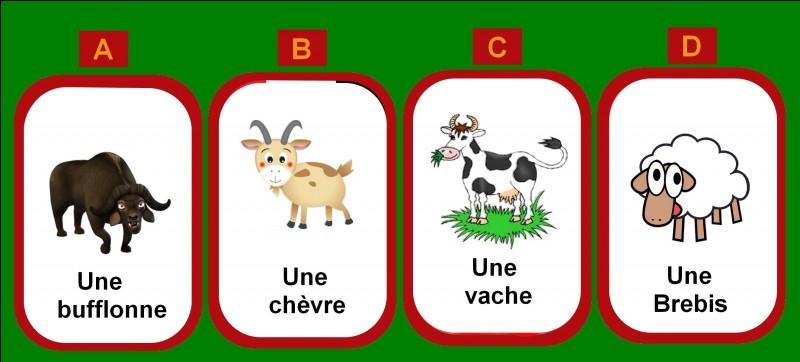 Avec le lait de quel animal est fabriqué le munster ?