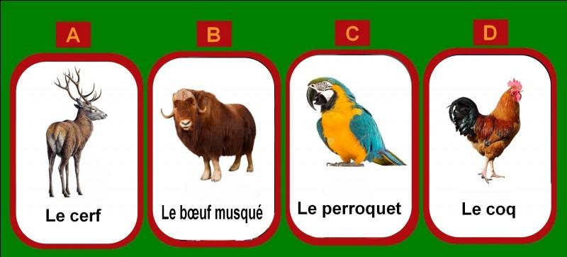 Quel nom d'animal désigne aussi un porte-manteau ?