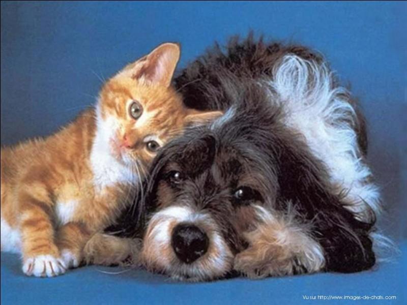 Es-tu félin ou canin ?