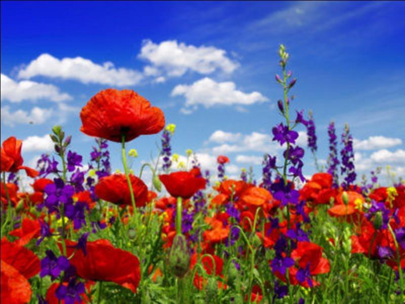 Quelle fleur préfères-tu ?