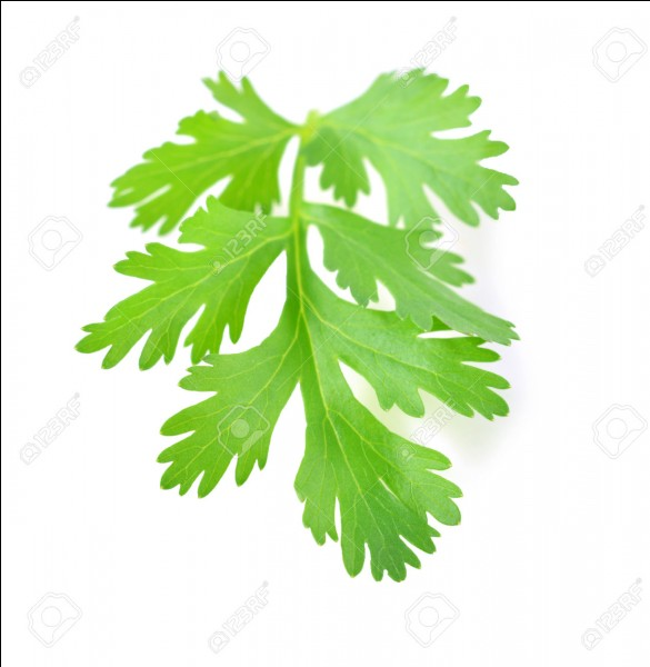 Quelle est cette plante aromatique ?