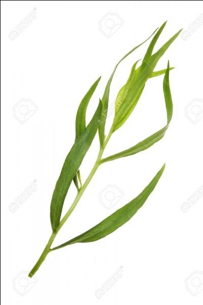 Quelle est la plante aromatique ayant les feuilles comme celles ci-dessus ?