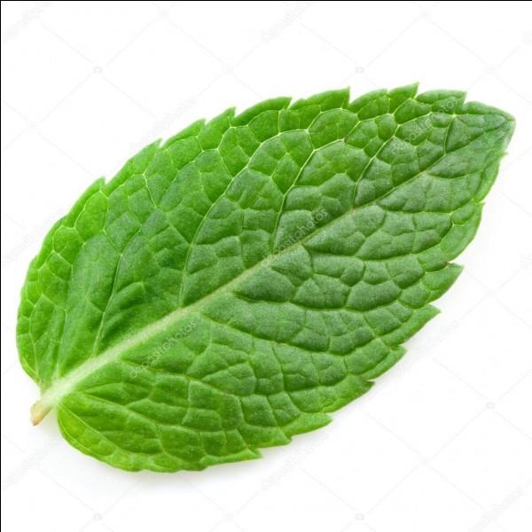 Quelle est la plante aromatique ayant les feuilles comme celle ci-dessus ?