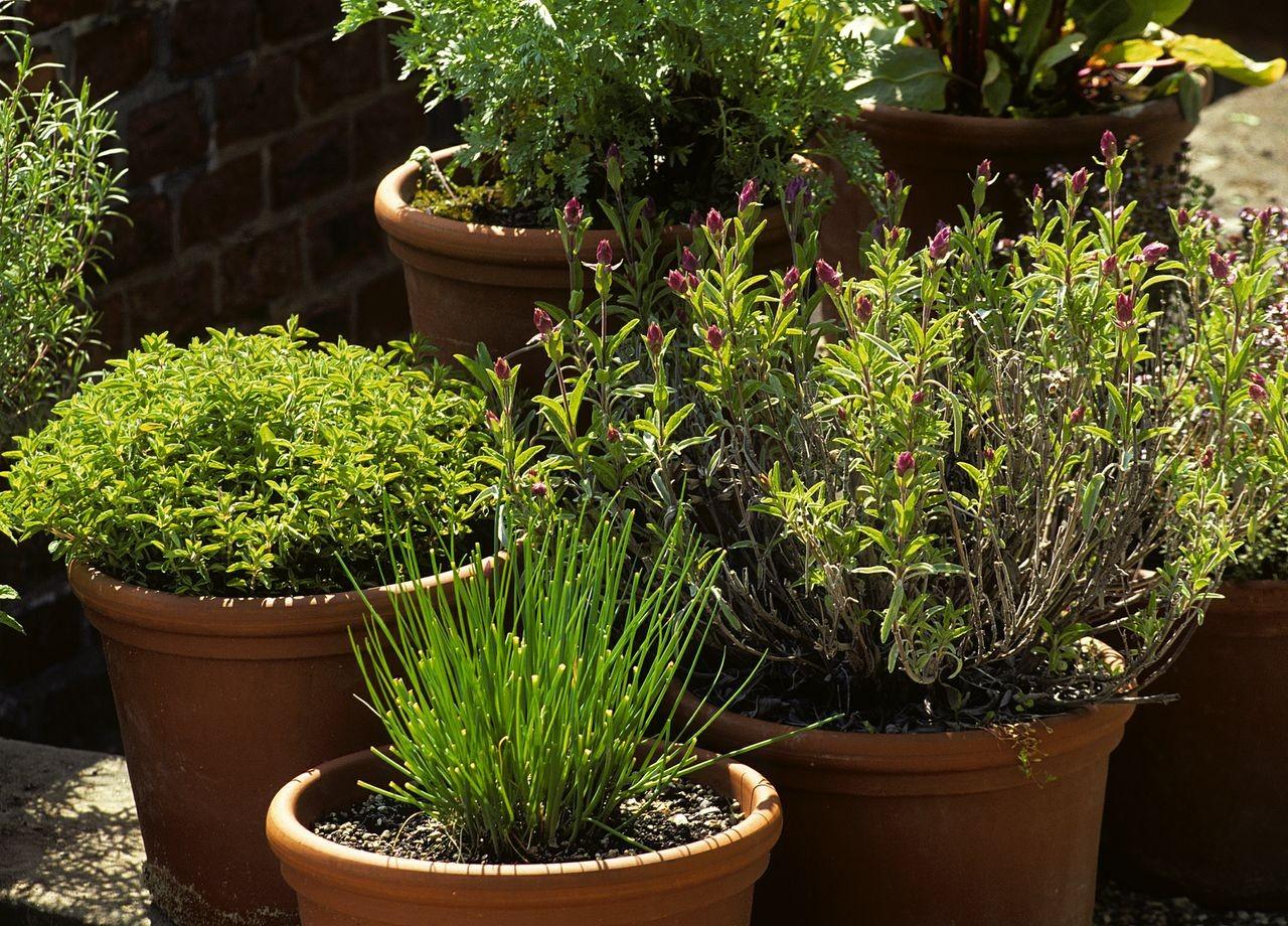 Savez-vous reconnaître les plantes aromatiques ?
