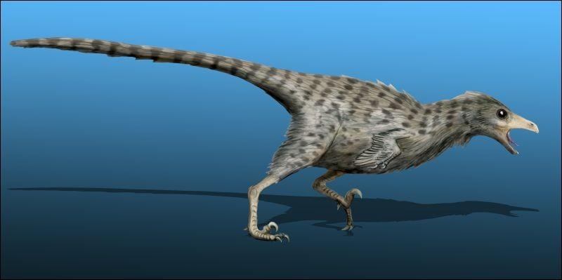 Certains types d'oiseaux sont des dinosaures.