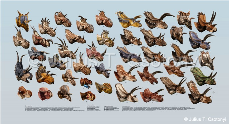 Chez les ceratopsiens, on distingue actuellement trois sous-familles. Lesquelles ?