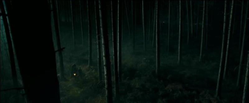 La Première Tâche du Tournoi des Trois Sorciers implique des Dragons. Des rumeurs s'ébruitent rapidement et les sorciers sont finalement prévenus. Où les Dragons sont-ils cachés dans le quatrième film avant le début du Tournoi ?