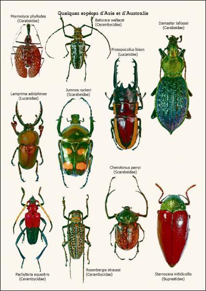 Combien y a-t-il d'espèces de coleoptères?