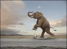 L'éléphant est le seul mammifère qui ne peut pas sauter.