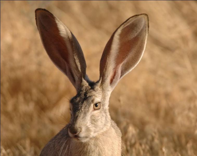 Avez-vous des grandes ou petites oreilles ?