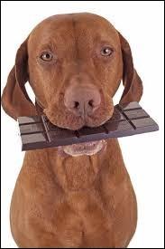 Pour qui manger du chocolat peut-être mortel ?