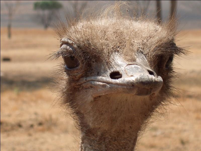 Tu fais un safari-photo en Afrique, quel animal vas-tu rencontrer ?