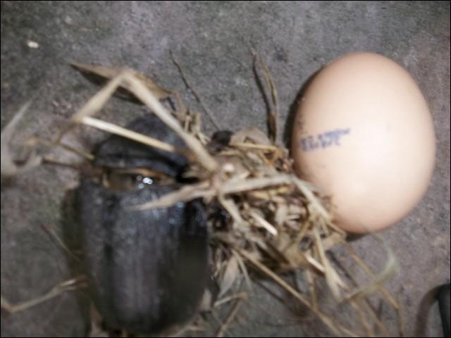 Quel animal vois-tu à côté de l'œuf ?