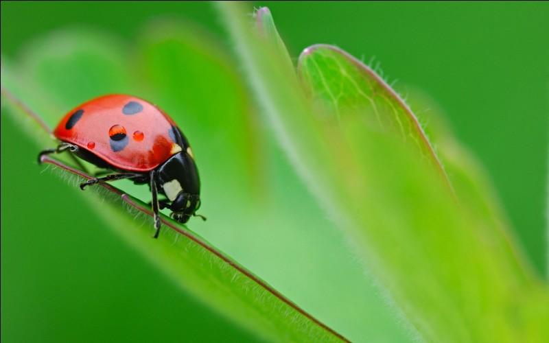 Sciences - Laquelle de ces espèces est la plus sensible à une polyploïdisation suivie d'une hybridation ?