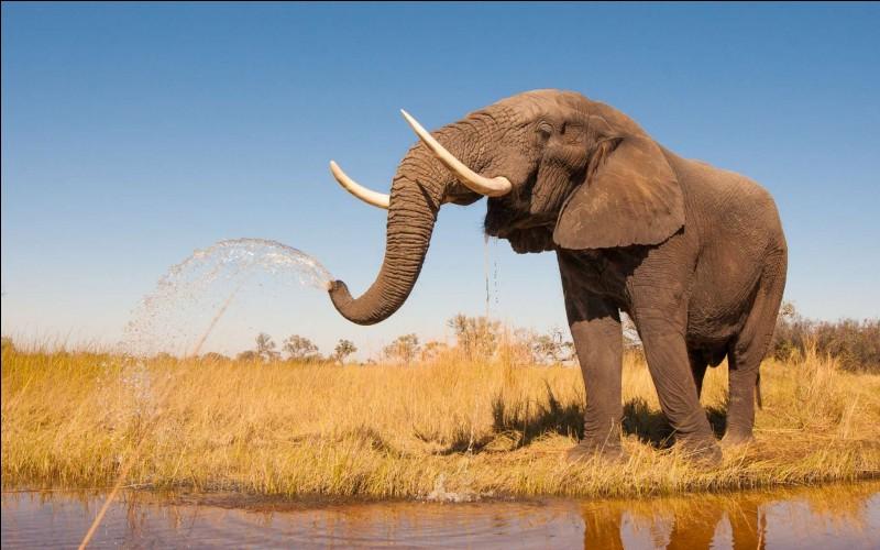 Cet animal aux grandes oreilles vit en Afrique. Quelle est la dernière lettre de son nom ?