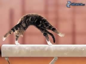 Quizz - La gymnastique