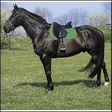 Pourquoi on met une selle sur un cheval ?