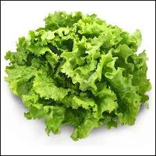 Comment appelle-t-on une catapulte à salade?