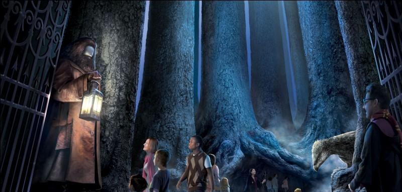 Dans quel pays les scènes de la Forêt interdite ont-elles été tournées ?