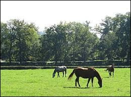 Le cheval est un herbivore ruminant.
