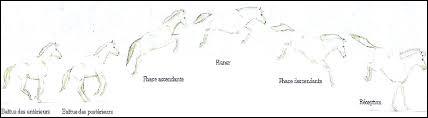 Combien existe-t-il de phases du saut et quelles sont-elles ?