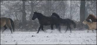 Quelles peuvent-être les conséquences de la domestication sur le cheval ou le poney ?