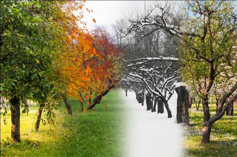 Quelle saison préfères-tu ?