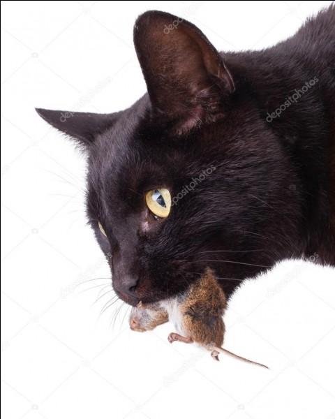 Lorsque qu'un chat ramène une proie dans sa gueule et la donne à son maître ou la pose devant la maison, qu'est-ce que cela veut dire ?