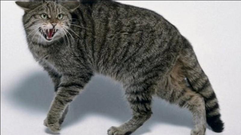 Comment le chat montre t'il qu'il est effrayé ?