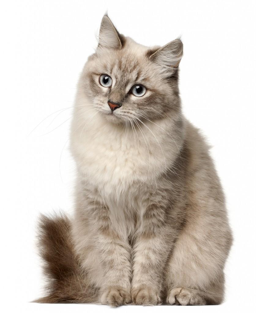 Quizz - Les chats