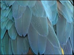 À quel animal appartient ce plumage ?