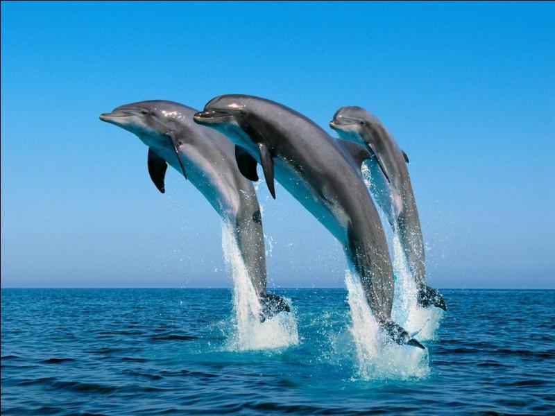 Le dauphin peut faire des bonds de 7 mètres.