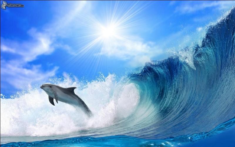 """Le dauphin possède un """"sonar"""" qui lui permet de foncer sur ses proies."""