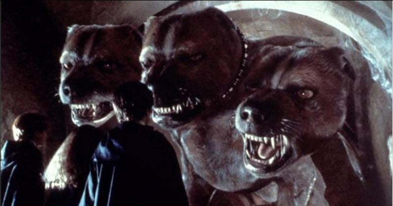 Comment se nomme le chien à trois têtes qui garde la pierre philosophale ?