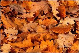 Retrouvez l'arbre grâce à ses feuilles d'automne.