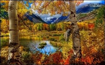 Quelle couleur domine l'automne ?