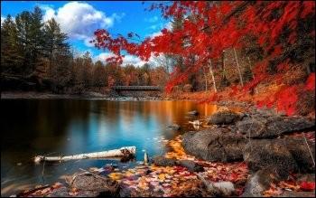 Que peut-on ramasser l'automne ?