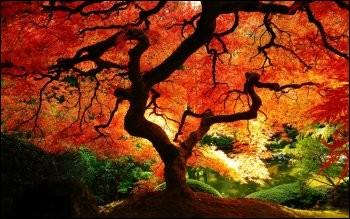En littérature, dans un sens figuré. Que désigne l'automne ?