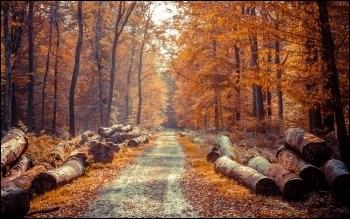 Quelle saison vient après l'automne ?