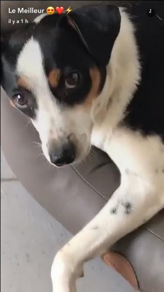 Quel animal de compagnie a-t-elle ?
