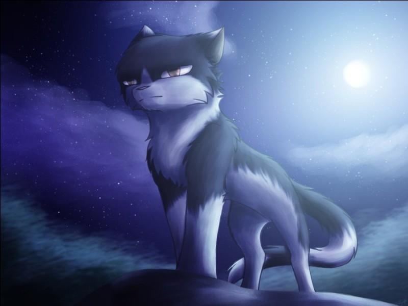 - J'étais le compagnon de la sœur d'Étoile Bleue, et le mentor d'Étoile du Tigre, qui suis-je ?