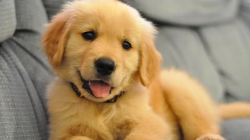 Quel est le prénom de son chien ?