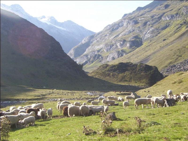 Dans quelle mythologie Faunus est-il le protecteur des troupeaux ?