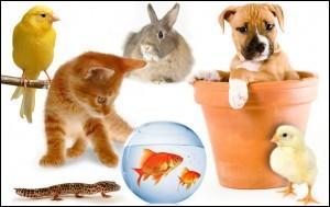 Quel est ton animal de compagnie préféré ?