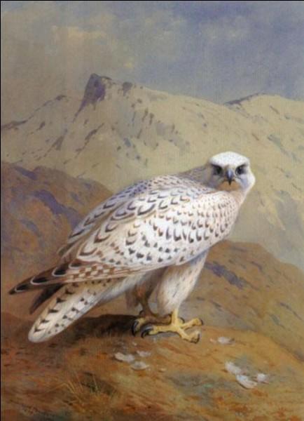 Animaux - Quel est cet oiseau ?
