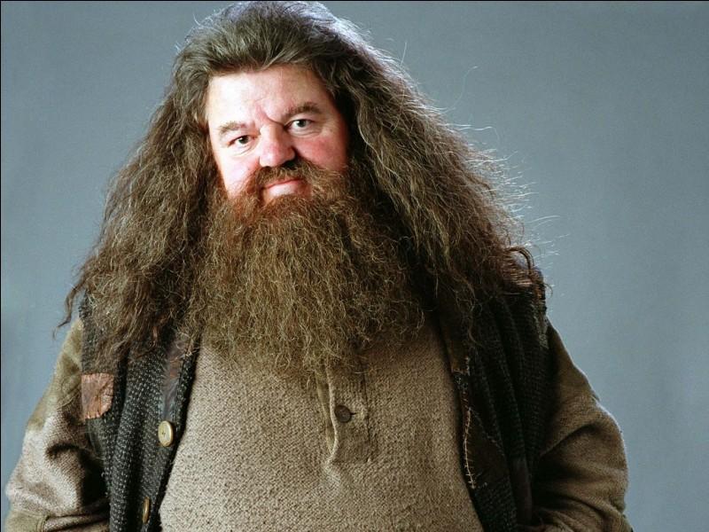 Hagrid est un professeur durant quel film ?